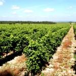 Tejo Тежу - португальский винодельческий регион