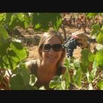 Энотуризм в Португалии, Алентежу, сбор урожая