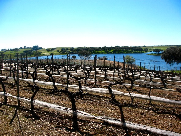 Виноградники Herdade da Calada, Алентежу, Португалия