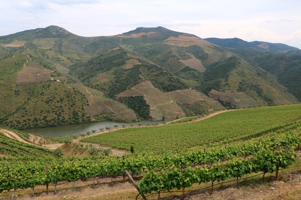 The vineyards of Quinta da Cabreira