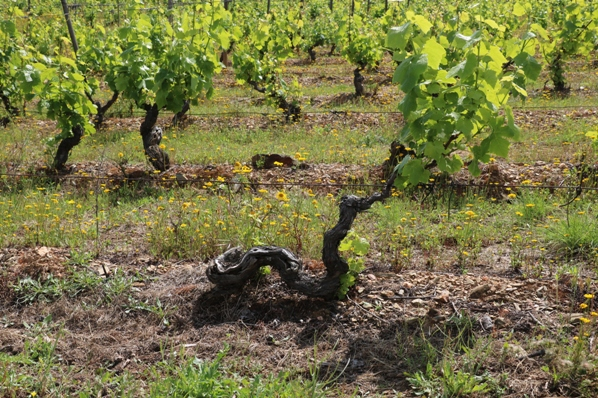 Old vines Douro Superior