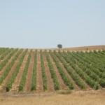 Винодельческий регион Португалии Алентежу