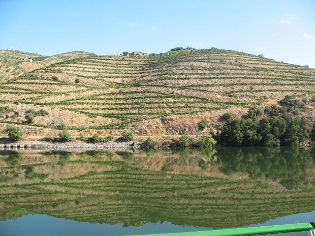 Виноградники отражаются в водах Дору