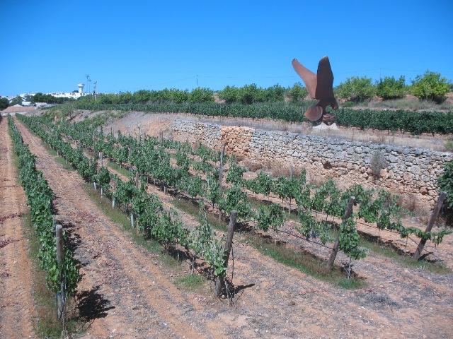 Quinta dos Lagos виноградники