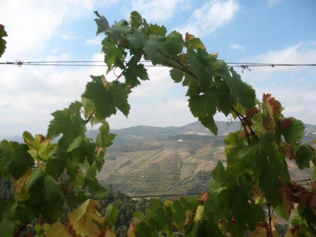 На виноградниках Кинта ду Портал