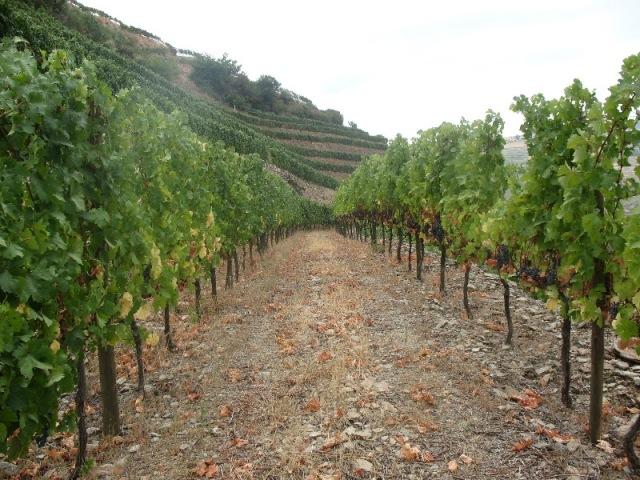 На виноградниках Quinta do Portal