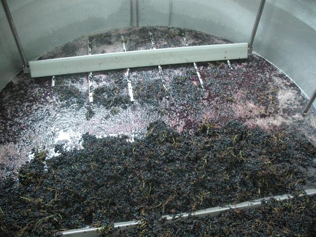 Мацерация винограда без отделения от гребней