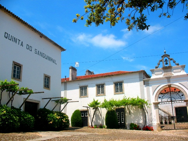 Экскурсия на винодельческое хозяйство Кинта ду Сангинял