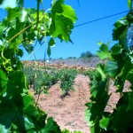 Посещение винодельческого хозяйства