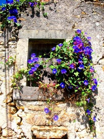 Окно в цветах