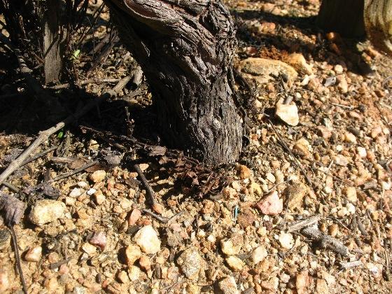 Глиняные почвы, Алентеу, Португалия