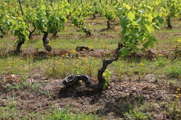 Old vines Douro Superior